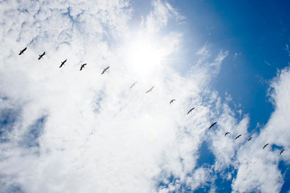 BIrds fly over Avellanas Beach.