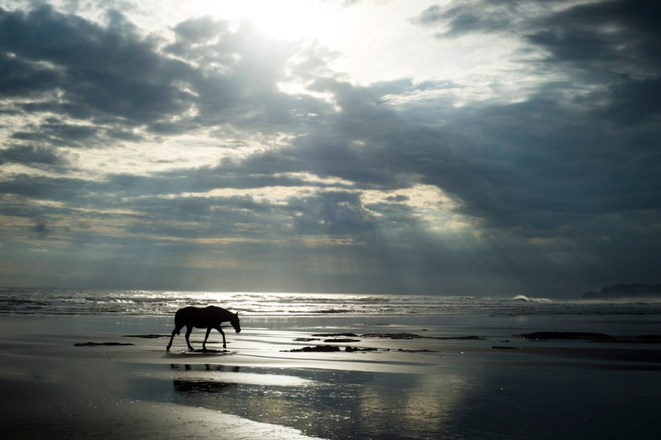 A horse wanders onto the beach right in front of our home.