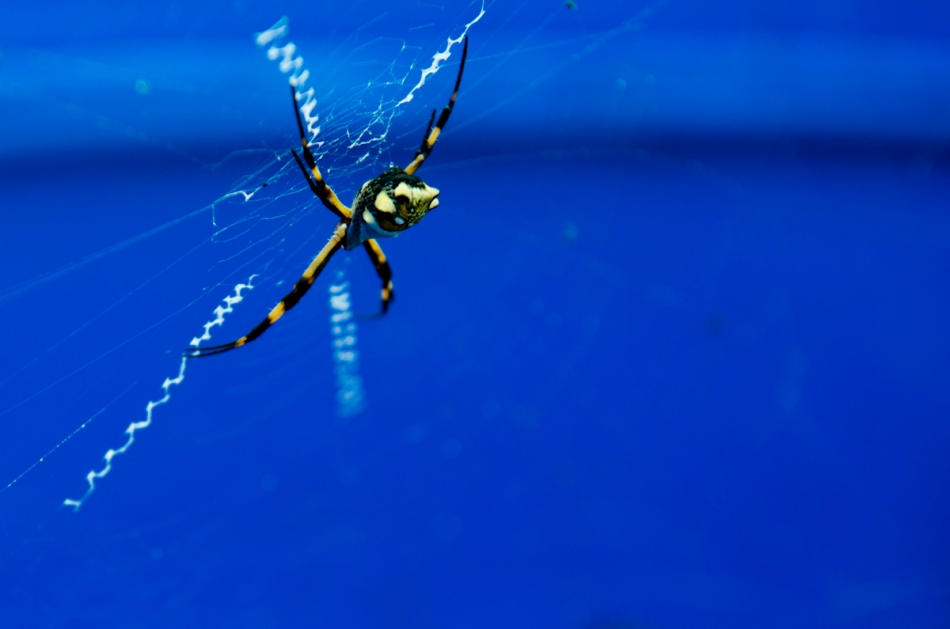 We saw a lot of interesting wildlife this week, including this spider in a garbage can at our worksite.