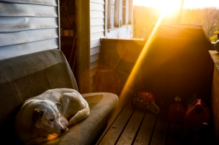 Charlie's dog Cheondung, meaning Thunder Boy or Heaven's Boy in Korean, sits on the front porch during sunrise.